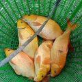 Cá về nha ae