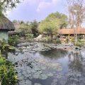 Sáng mai tại Thủy Thuỷ Mộc Cà Phê Hồ cá lóc sẽ ăn mạnh nha ae cứ 10 cây là cần