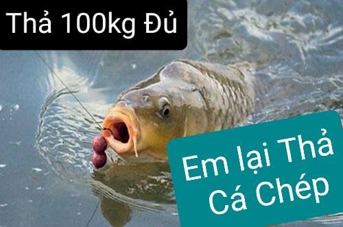 Kính gửi. Tiếp nối 110kg cá lóc đã thả cho ngày thứ 5.